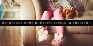 Dangerous Home Humidity Levels in Auckland