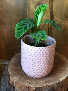 Everly Pot