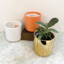 Load image into Gallery viewer, Modern Ceramic Planter (White, Black, Peach, Gold)