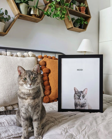 custom-cat-portraits