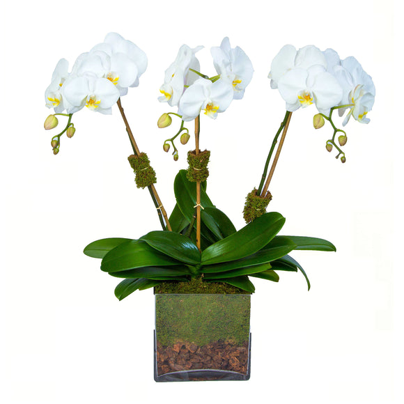 Set of three_orchids