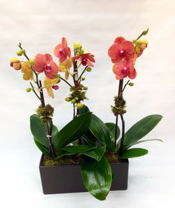 3 orchid in Rectangular