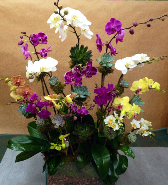 Colorful Arrangment of Orchids