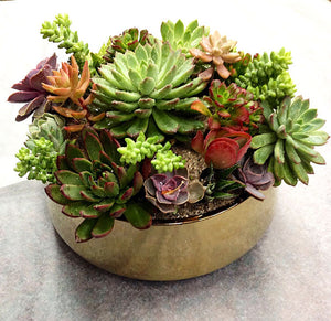 Succulent in Gold Pot H