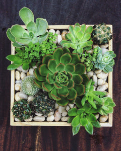 Succulent Arrangement Square