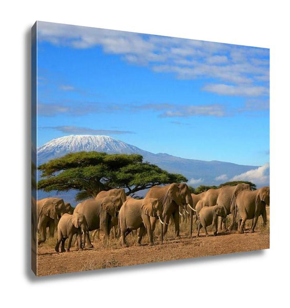 Gallery Wrapped Canvas, Kilimanjaro With Elephant Herd - customgiftstore.com
