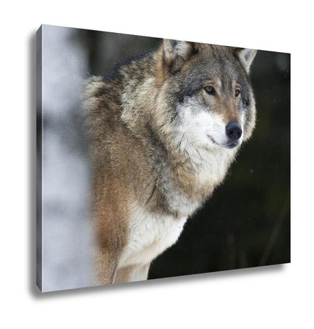 Gallery Wrapped Canvas, Wolf In The Cold Winter - customgiftstore.com