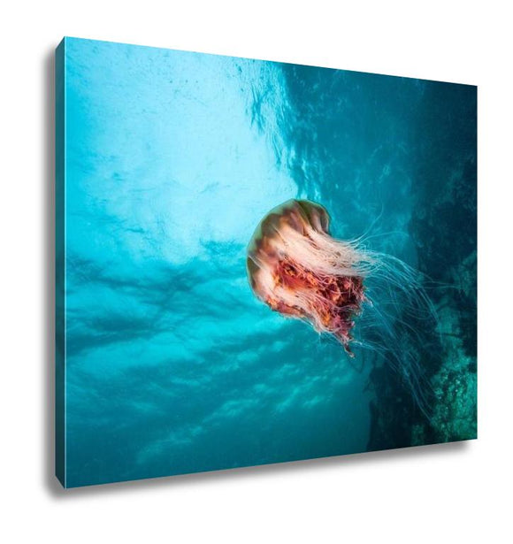 Gallery Wrapped Canvas, Jellyfish At British Columbia - customgiftstore.com