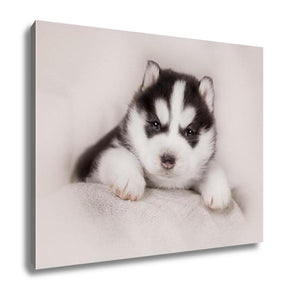 Gallery Wrapped Canvas, Cute Siberian Husky Puppy - customgiftstore.com