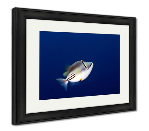 Framed Print, Picasso Triggerfish In The Red Sea - customgiftstore.com