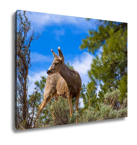 Gallery Wrapped Canvas, Elk Deer Grazing In Arizona Grand Canyon National Park USA - customgiftstore.com
