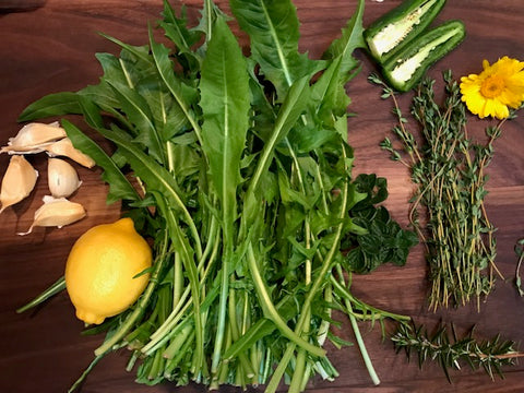 Dandelion greens and other culinary herbs