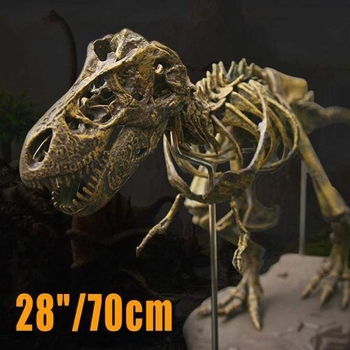 T Rex Skeleton Model