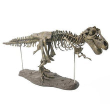 Load image into Gallery viewer, T Rex Skeleton Model