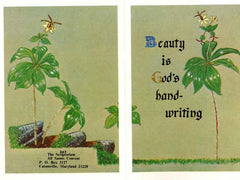BN-342 Beauty is God's hand-writing