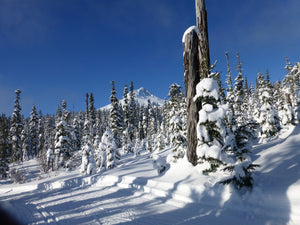 Interested in Mt Hood Ski Patrol?