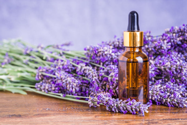 Lavender oil in a glass dropper with fresh lavender
