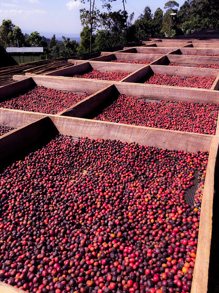 Natural Ethiopian coffee