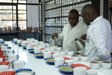 Cupping Kenyan coffees Nairobi