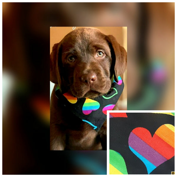 Pawfect Rainbow Collar Swag