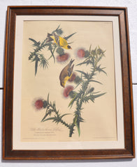 Audubon Yellow Bird Print