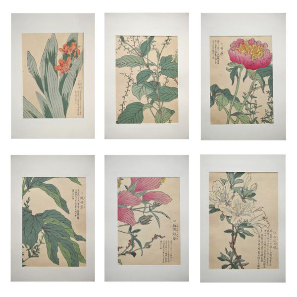Set of 6 Japanese Botanicals, 1891