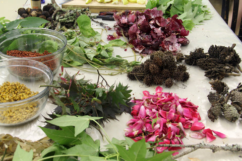 plants for dyeing