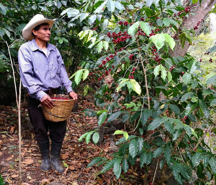 Our Barista in Guatemala