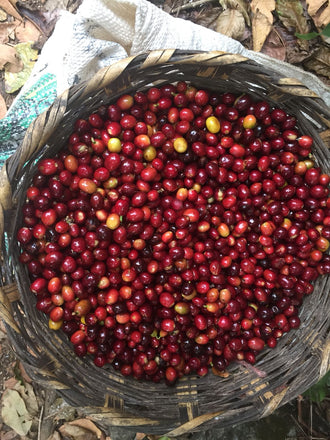 Stories from the field: Coffee from Huehuetenango