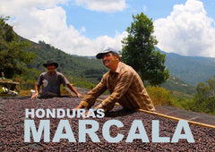 HONDURAS - NATURAL/COMSA - FAIR TRADE ORGANIC