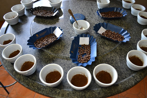 Advanced Coffee Cupping