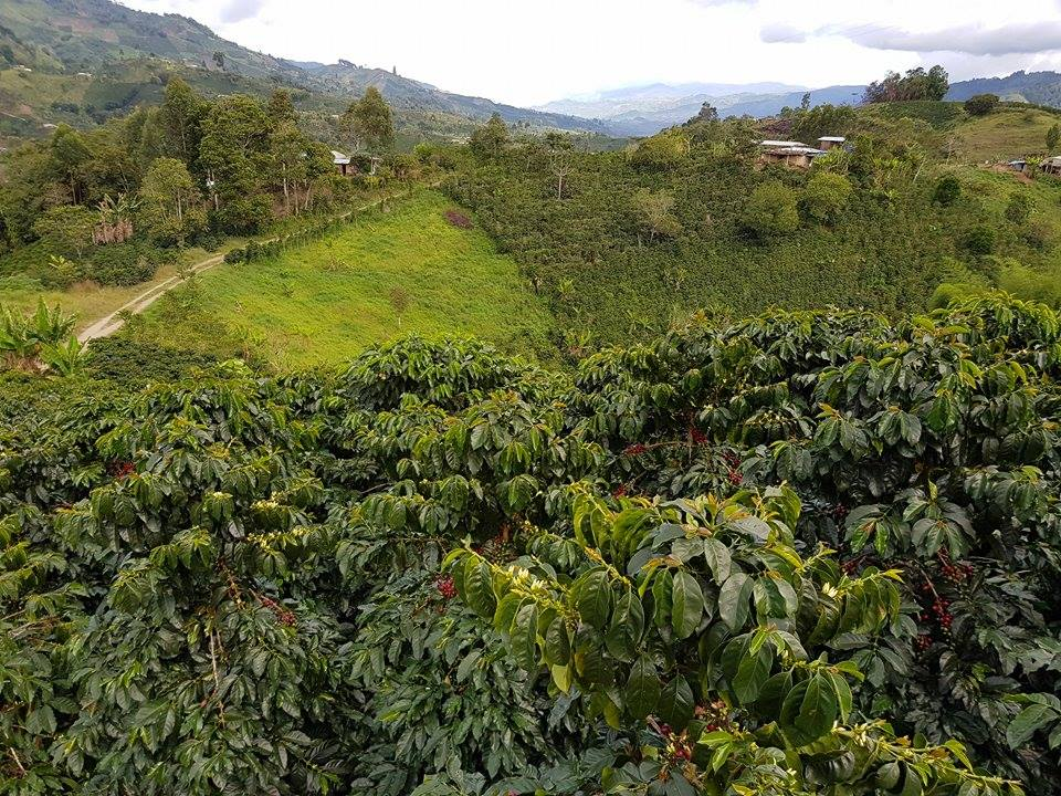 Good Folks in Colombia - Introducing Rodrigo Sanchez and Finca el Progreso