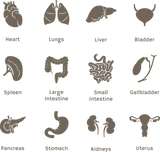 645 body organ icons (health, medical)