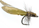 Superflies: Caddis Adult - Saffron Golden Green