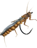 Superflies: Stonefly Adult - Olive Brown