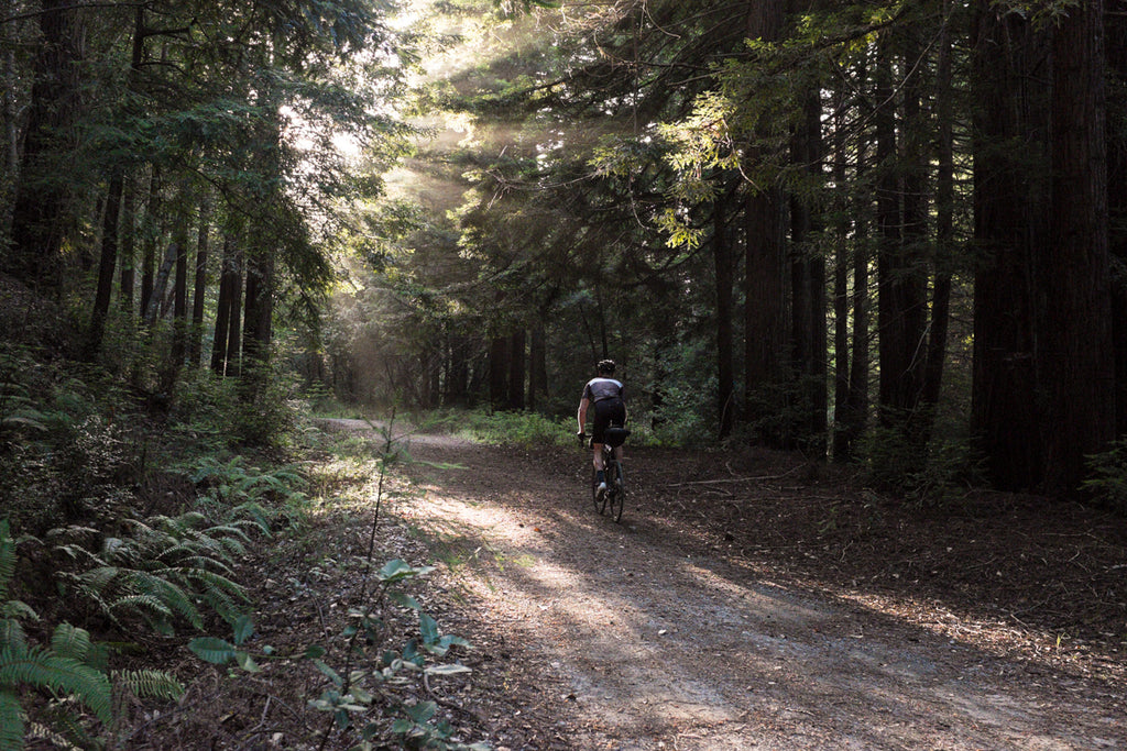 Old Haul Road Cycling Redwoods