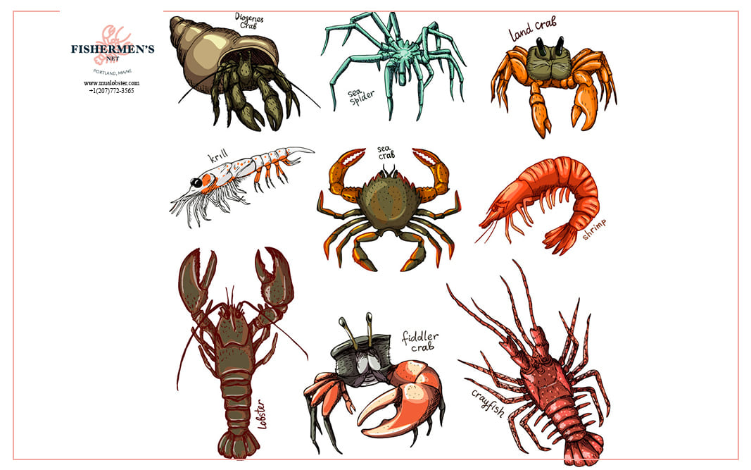 Lobsters are crustaceans