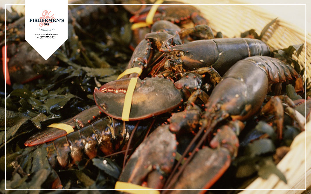 Soft shell lobsters have up to 30% less meat than hard shell lobsters