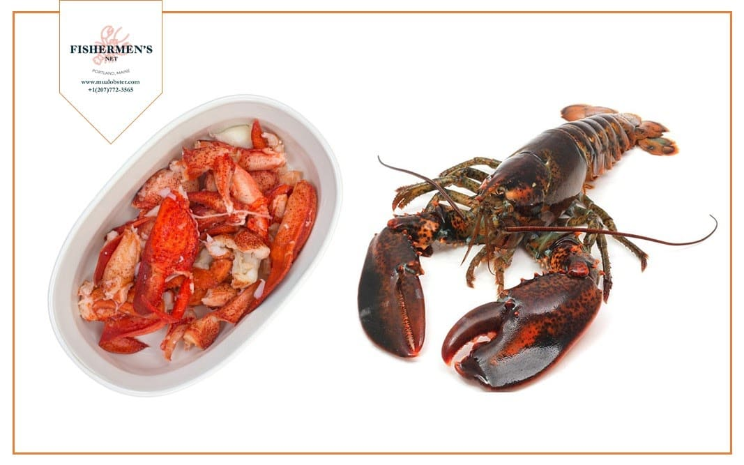 A live lobster yields up to 30% meat of its total weight
