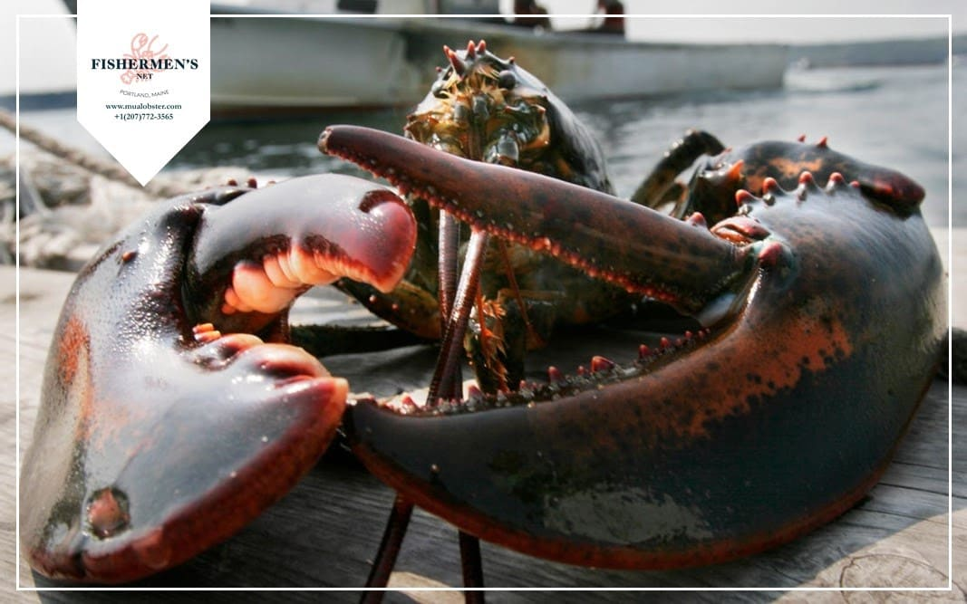 How to cook a live lobster to perfection?