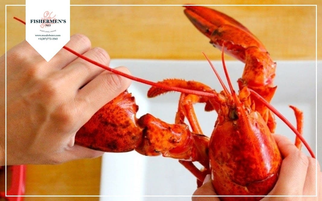 Twist the claws to separate them from the lobster's body