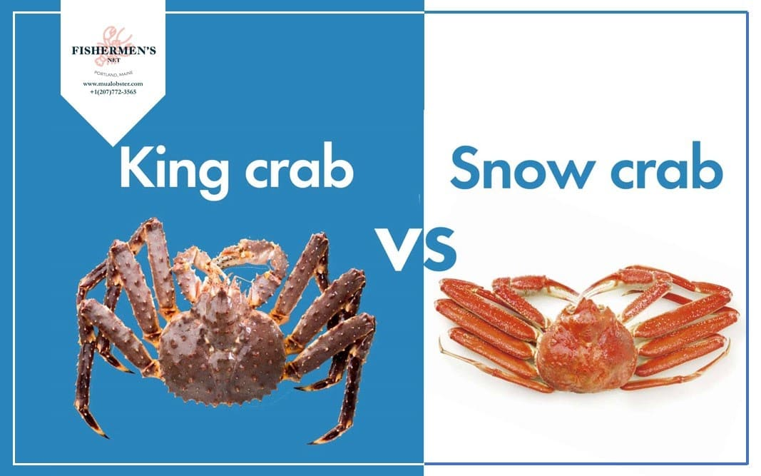 King Crab vs Snow Crab
