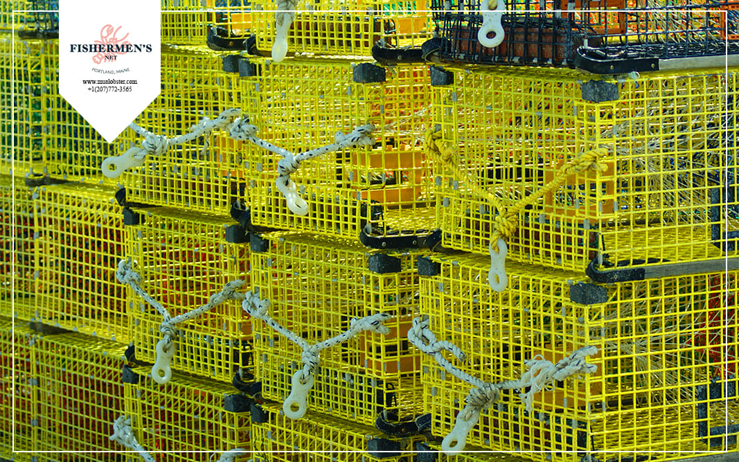 Lobster season is when traps are most common in Maine