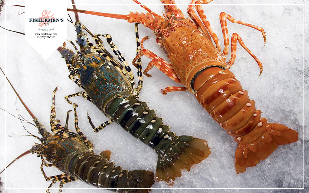 The different types of lobster