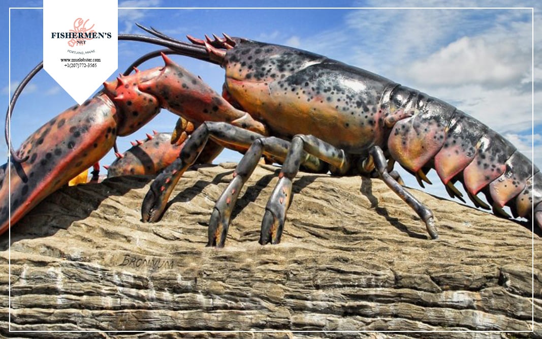 Lobster is an animal that belongs to the group of crustaceans
