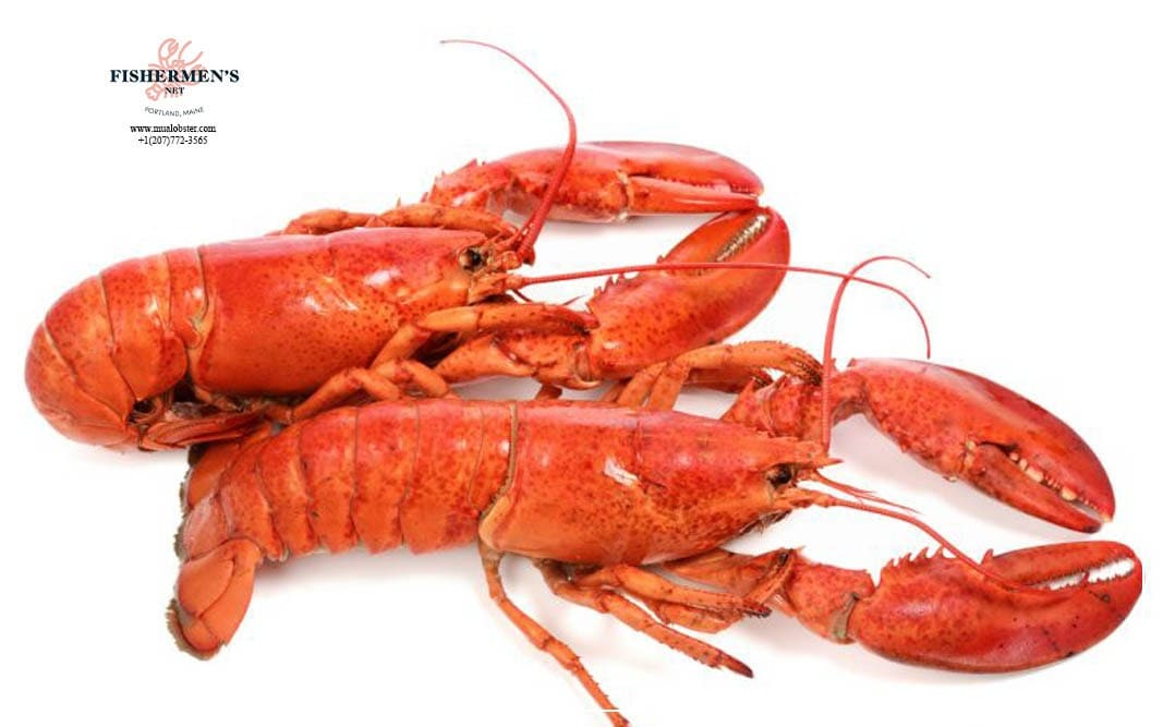 Chicken lobster or chick lobster are young small lobster weighing 1 - 2 lb