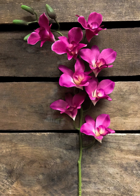 "ITEM 00941 FUCHSIA - 33"" FUCHSIA COATED ORCHID SPRAY W / 8 FLWRS & 4 BUDS"
