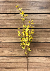 "ITEM 00954 - 38"" FORSYTHIA SPRAY X 4"