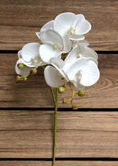 "ITEM 00970 W - 27.5"" WHITE PHALAENOPSIS ORCHID SPRAY WITH COATING"