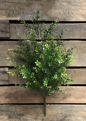 "ITEM 11230 - 22"" BOXWOOD BUSH"